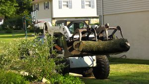 Tree Removal Contractor in Morrisville, PA Bucks County